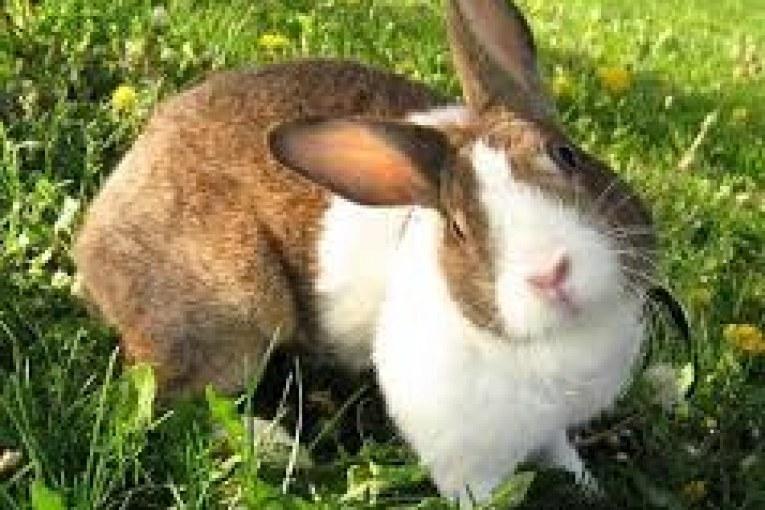 Troppi conigli in zona industriale