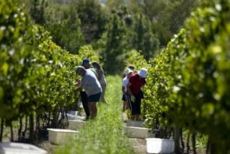 Per i nostri vini è vitale far crescere l'export